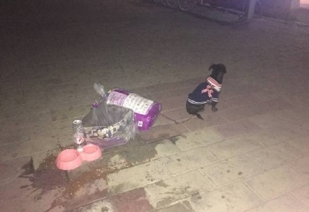 这是2017年春节前,北京一只被遗弃的狗,主人在条上写明,已经想尽各种办法,还是无能为力