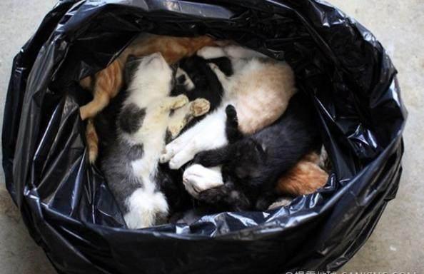 安乐死后丢在垃圾袋的一只只宠物