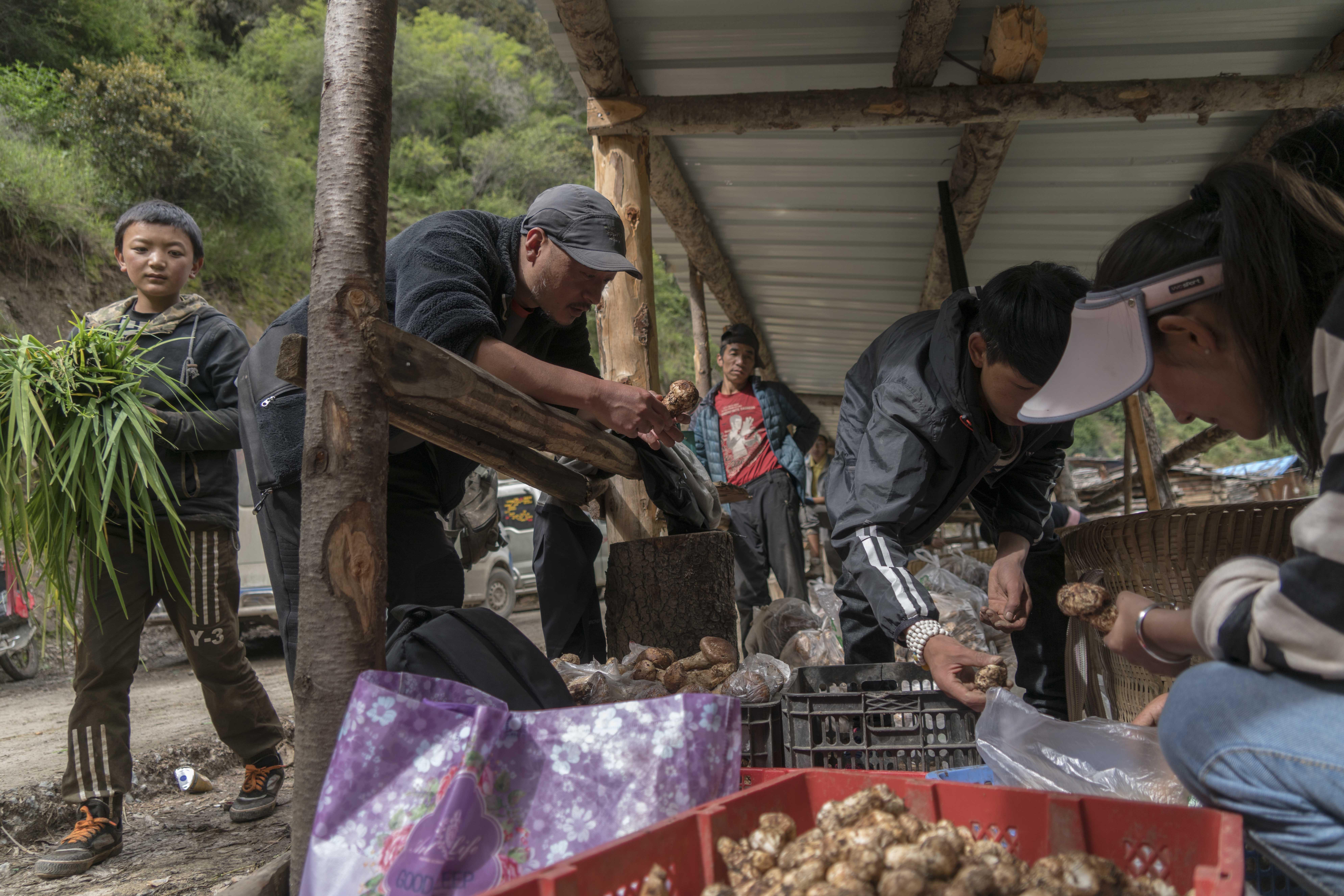 记者支教后改行卖松茸 不为赚钱只是牵挂那的孩子
