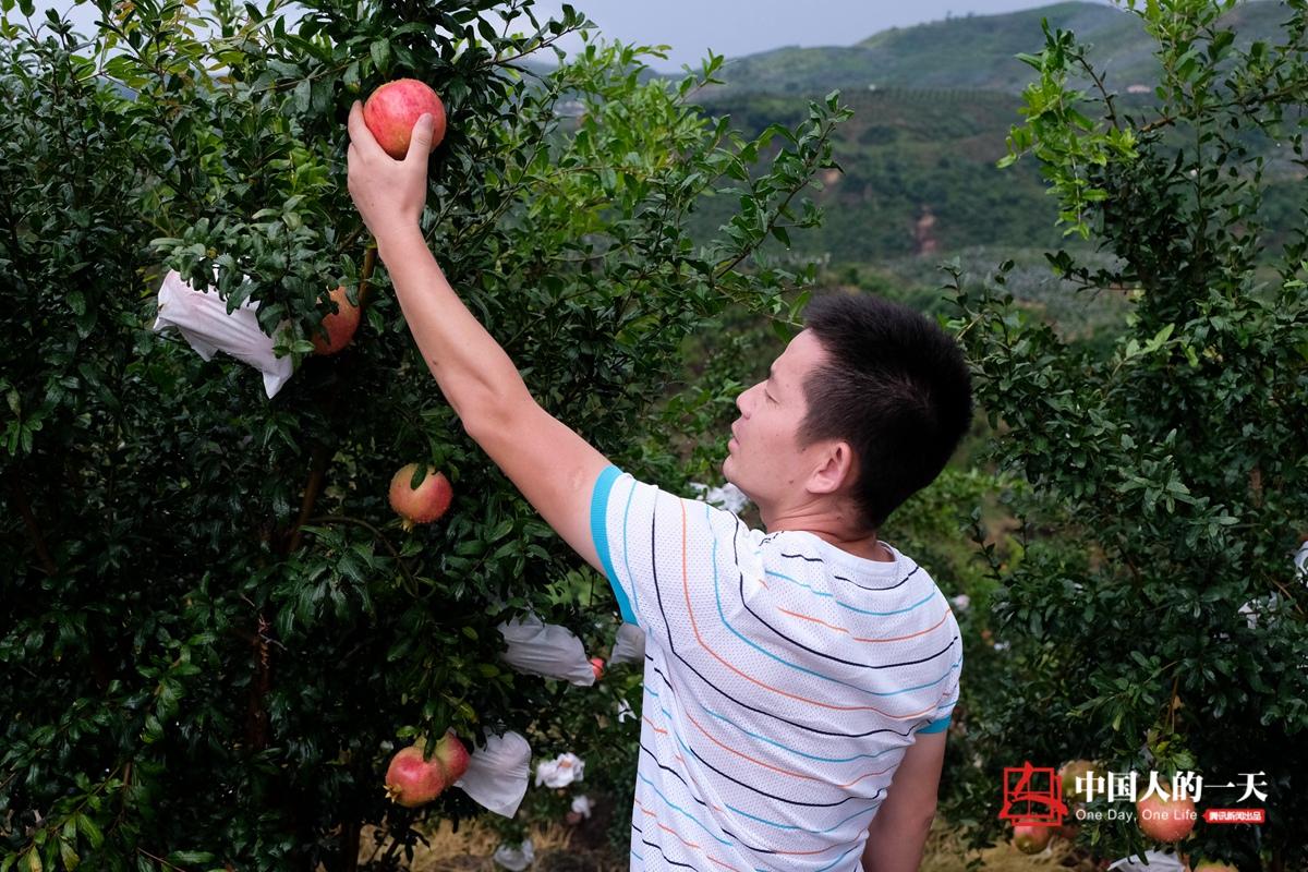 中国人的一天第3181期:石榴村村民年入百万书记开路虎