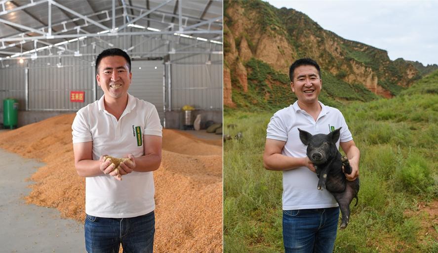 千万富翁进大山养2000头猪 每天第一口猪食自己吃