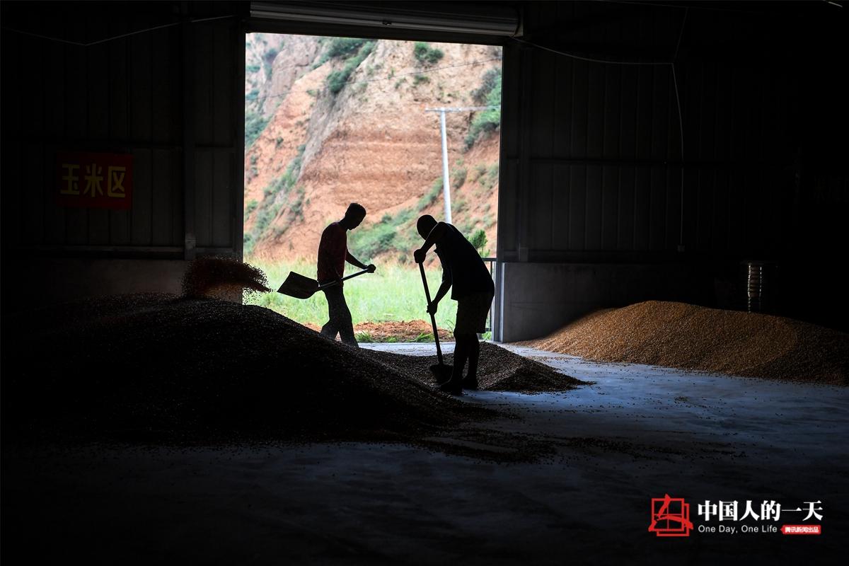 中国人的一天第3189期:千万富翁养猪每天吃第一口猪食