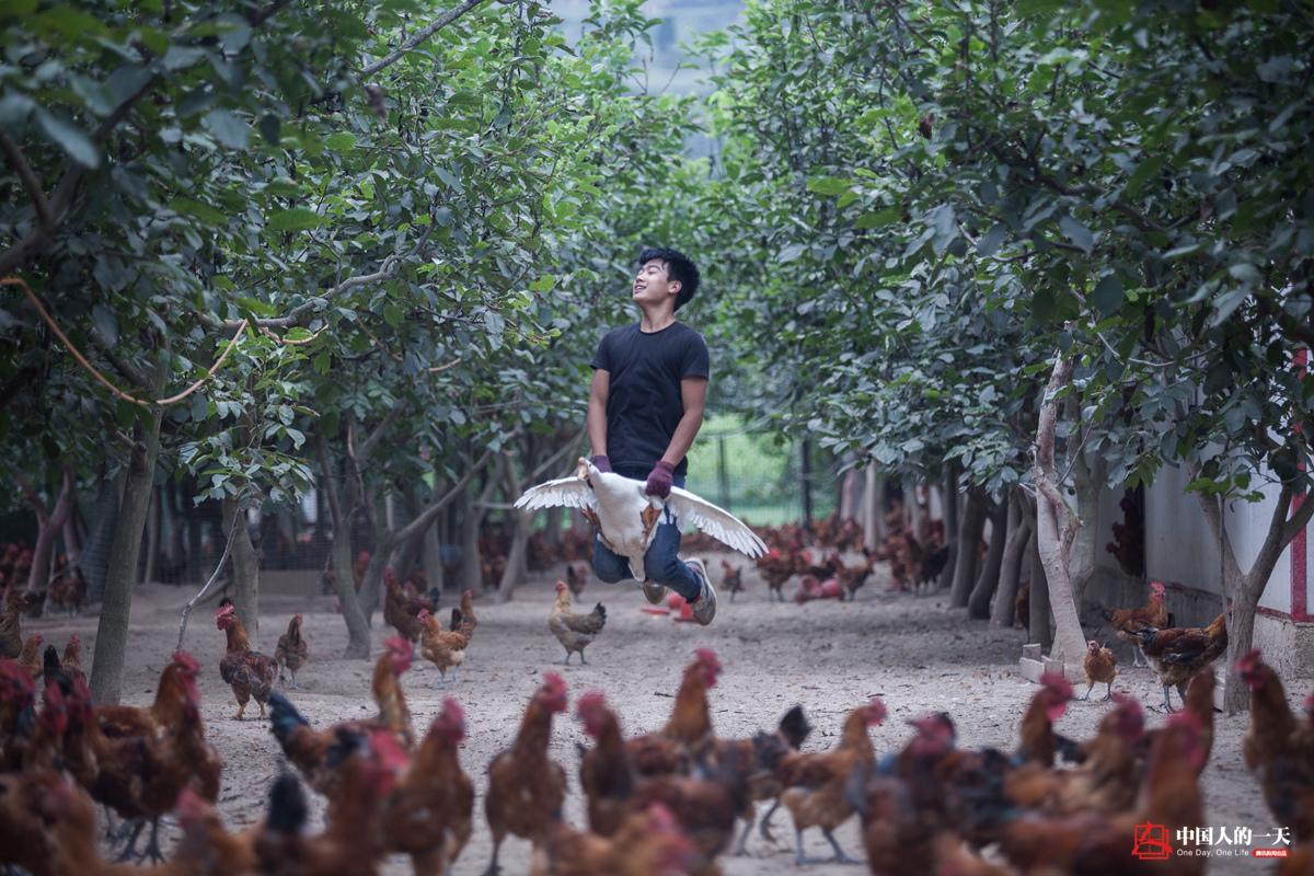 """2千只鸡一起""""比心""""有点皮?22岁小伙留守村庄另类创业"""