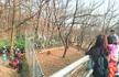 动物园游客为近距离观虎 无视脉冲电网标志