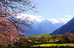 心念九年的西藏行,在波密遇见最美春天