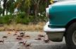 百万螃蟹横行 当地人担心有毒不敢吃