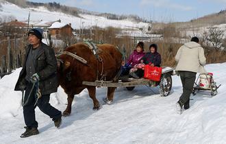 女子第一次坐火车 转搭牛车回家