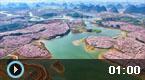 贵州万亩樱花盛开