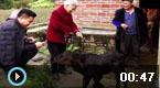 初生牛犊长6条腿2个屁股