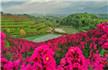 数百亩紫薇花绽放,清远这个山谷美若仙境