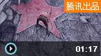 蔡国强:艺术家就是一匹狼