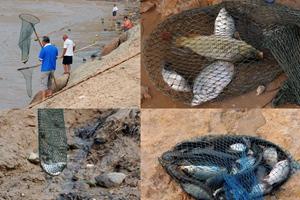 黄河水库放水现流鱼现象 民众冒险河里捞鱼