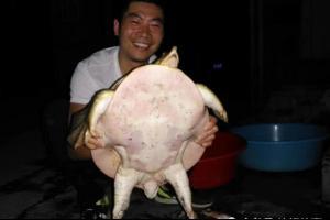 15.7斤!男子意外钓起罕见野生大鳖 养了一夜后决定放生