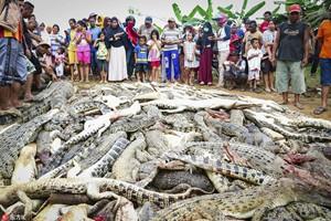 """触目惊心!印尼居民为""""复仇""""屠杀数百条鳄鱼"""
