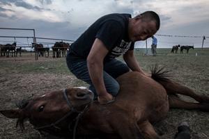 """16岁去""""狼图腾""""草原打工35岁创业 他建立了蒙古马保护群"""
