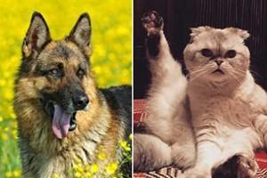 人不如狗系列:世界上身价最高的宠物们