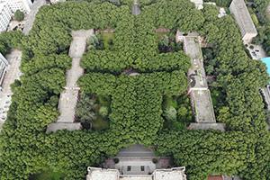 """郑州一高校似""""绿色迷宫"""" 看起来好清凉"""