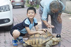 耄耋老人将3两小龟养到140斤龟王 有人出3万元她不舍得卖
