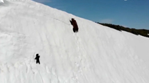 熊宝宝励志爬雪山感动网友