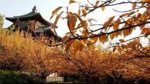 """晴好天气 北京的公园""""秋景冬赏""""将持续到下周"""