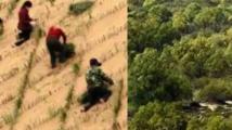 治沙奇迹£¡60年沙漠变绿洲