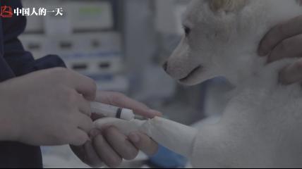 给狗切肿瘤、为蛇通便…全能宠物医师却被说要价太高 | 伴侣动物