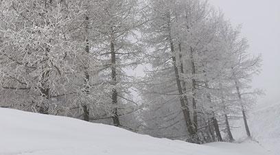 張家口賽區云頂滑雪公園迎春雪