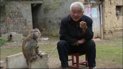 耍猴人流浪30年,供3个儿女上大学