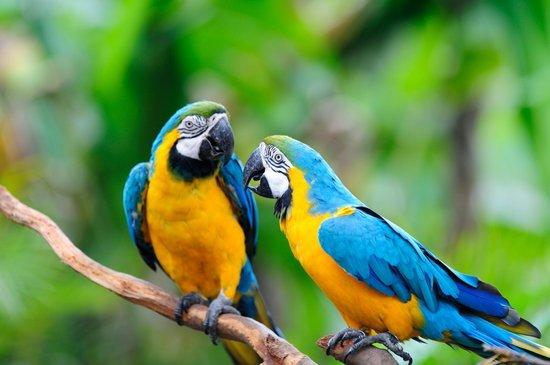 —黑天鹅等等汇聚世界各地的珍稀鸟类,荣和大地水陆空的三维动物
