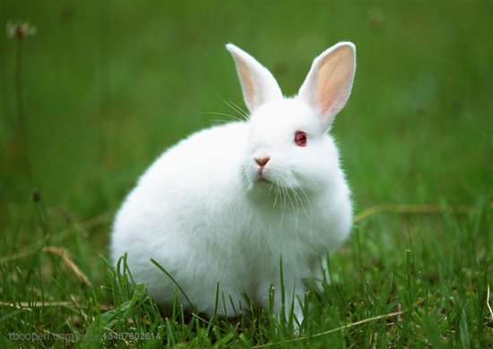追逐梦想的兔子 得先有一间属于自己的安乐窝