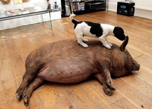 跨越种族的动物情侣秀恩爱(图)