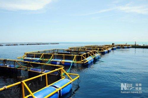目前海南省已有四家公司先后获批在西沙永乐群岛,南沙美济礁,渚碧礁等