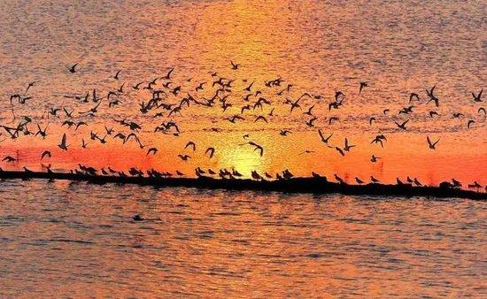 """""""候鸟族""""赞暖冬防城港:全生态海景城市 中国夏威夷"""