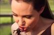 朱莉向儿女们示范吃蜘蛛蝎子,画面好辣眼睛