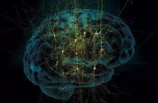 研究大脑,必须得先虚拟个大脑
