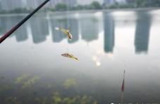 """老汉河边垂钓太独到,让水中不断上演""""鱼吃鱼"""""""