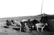 老中国物产图文记事:牧业篇