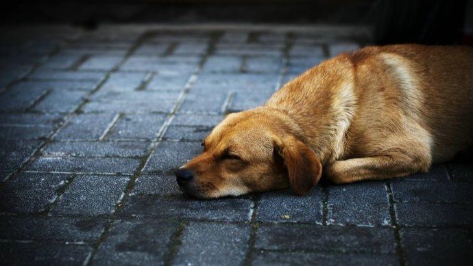 【法眼看世间】狗肉节背后是迷失本性的血腥和暴力
