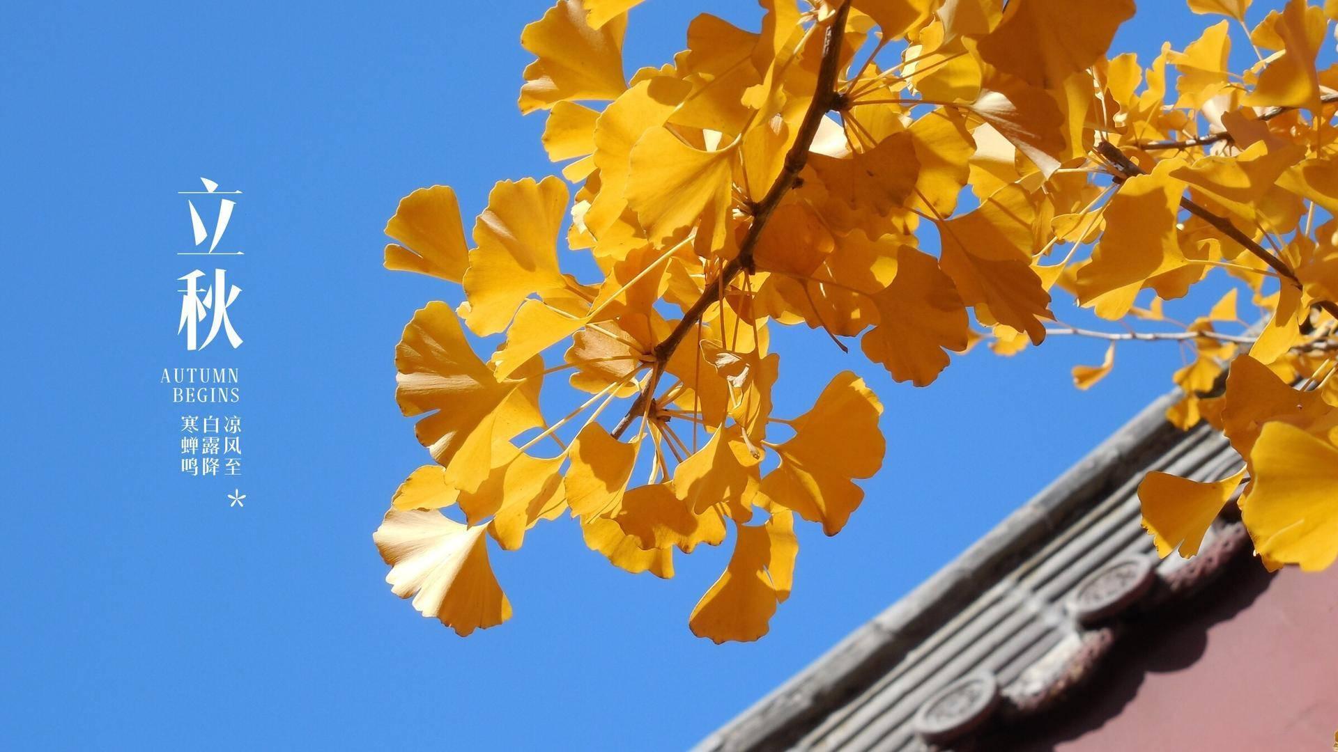 道医养生笔记丨木叶动秋声:立秋时节如何防燥
