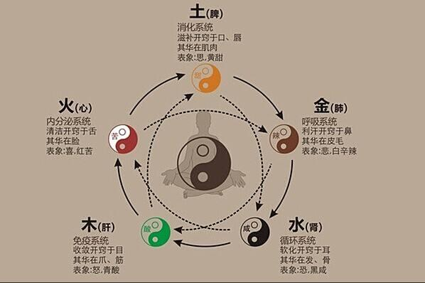《黄帝内经》土枢四象数术藏府观考释(下)