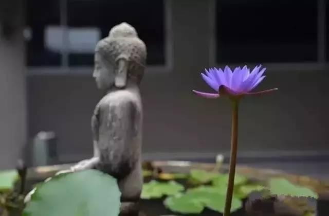 为什么说禅是离不开生活的?