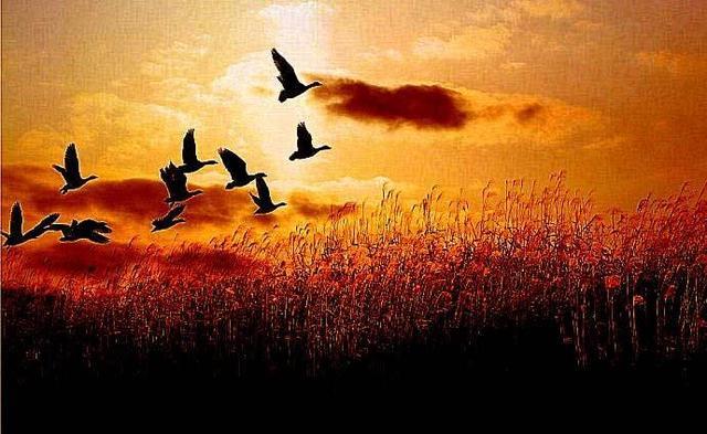 缘遇《诗经》 深味《诗经》:文心、史感、哲思的合一丨参赛作品