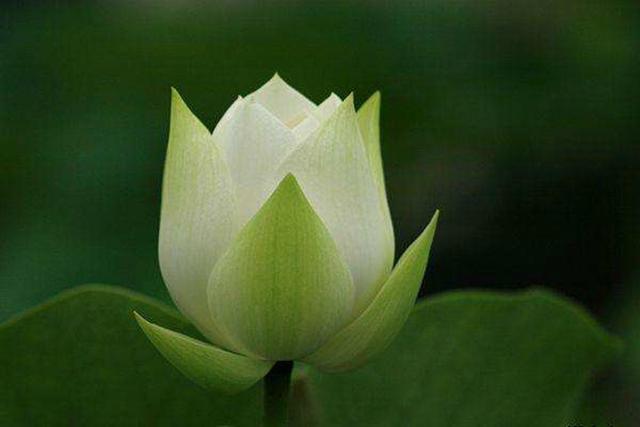佛乐 《汉地雪莲》:点一柱清幽的檀香 莲花处处开放