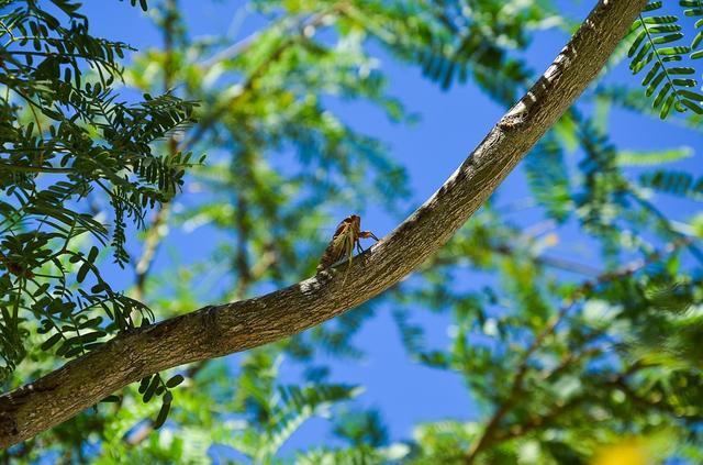 今日大暑:飞鸟不敢度 鸣蝉应自焦