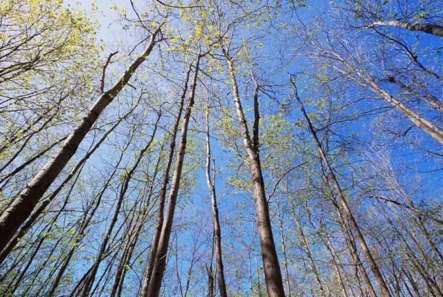 """诗经中的""""嘉树""""是指什么树?"""