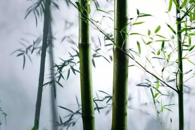 做人的最高境界是低调 精明的最高境界是厚道