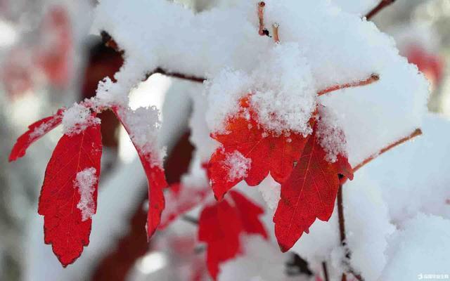 立冬:细雨生寒未有霜,勿忘御寒防冻伤