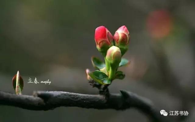 立春诗词 | 春光里的诗情画意