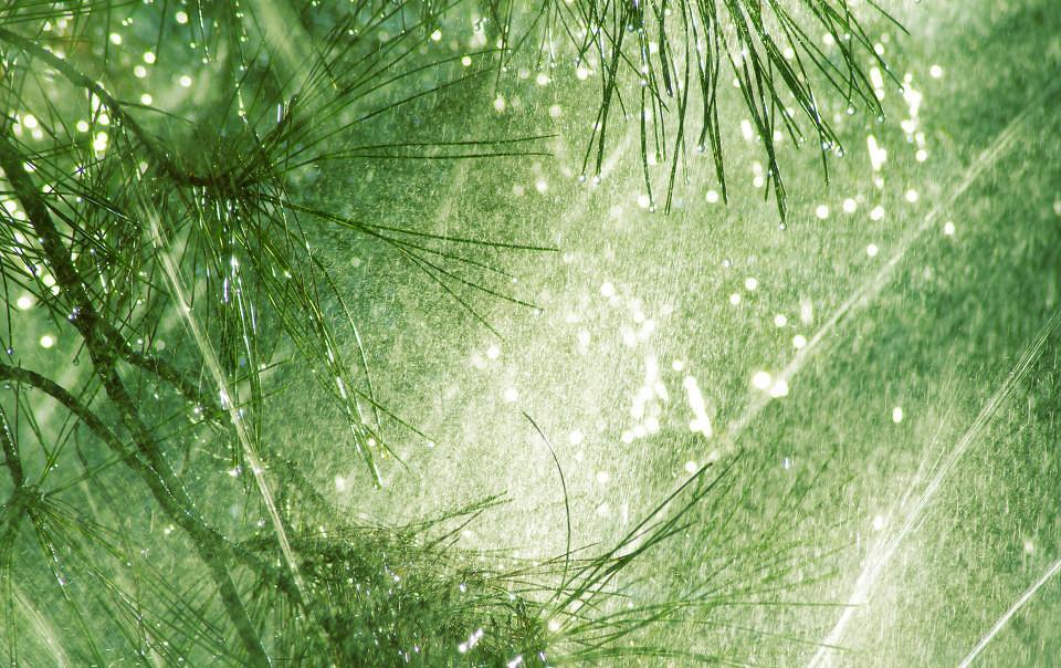 """草木到底是不是""""众生"""" 佛经有话说"""