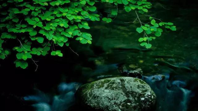 何为禅的精神?丨清凉禅话(三)